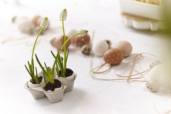 Narcisi come Decorazioni Per Pasqua